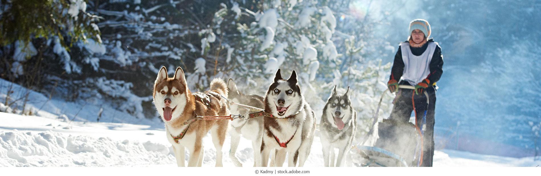 Huskies_180040549_webC